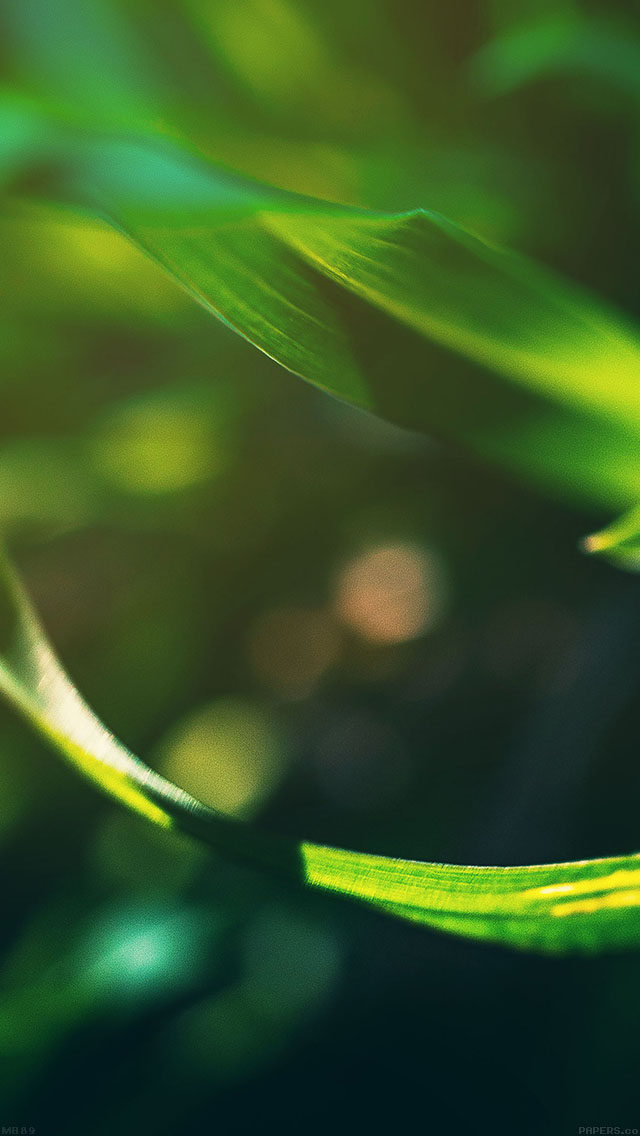 freeios8.com-iphone-4-5-6-ipad-ios8-mb89-wallpaper-a-and-b-2-leaf