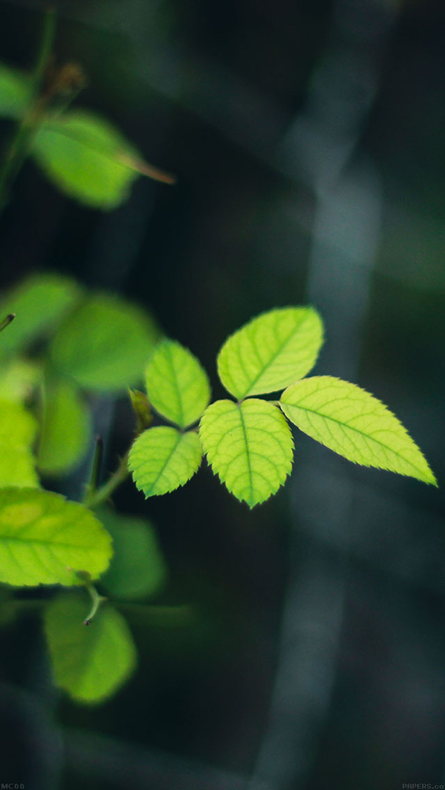 freeios8.com-iphone-4-5-6-ipad-ios8-mc00-wallpaper-greenish-flower-leaf