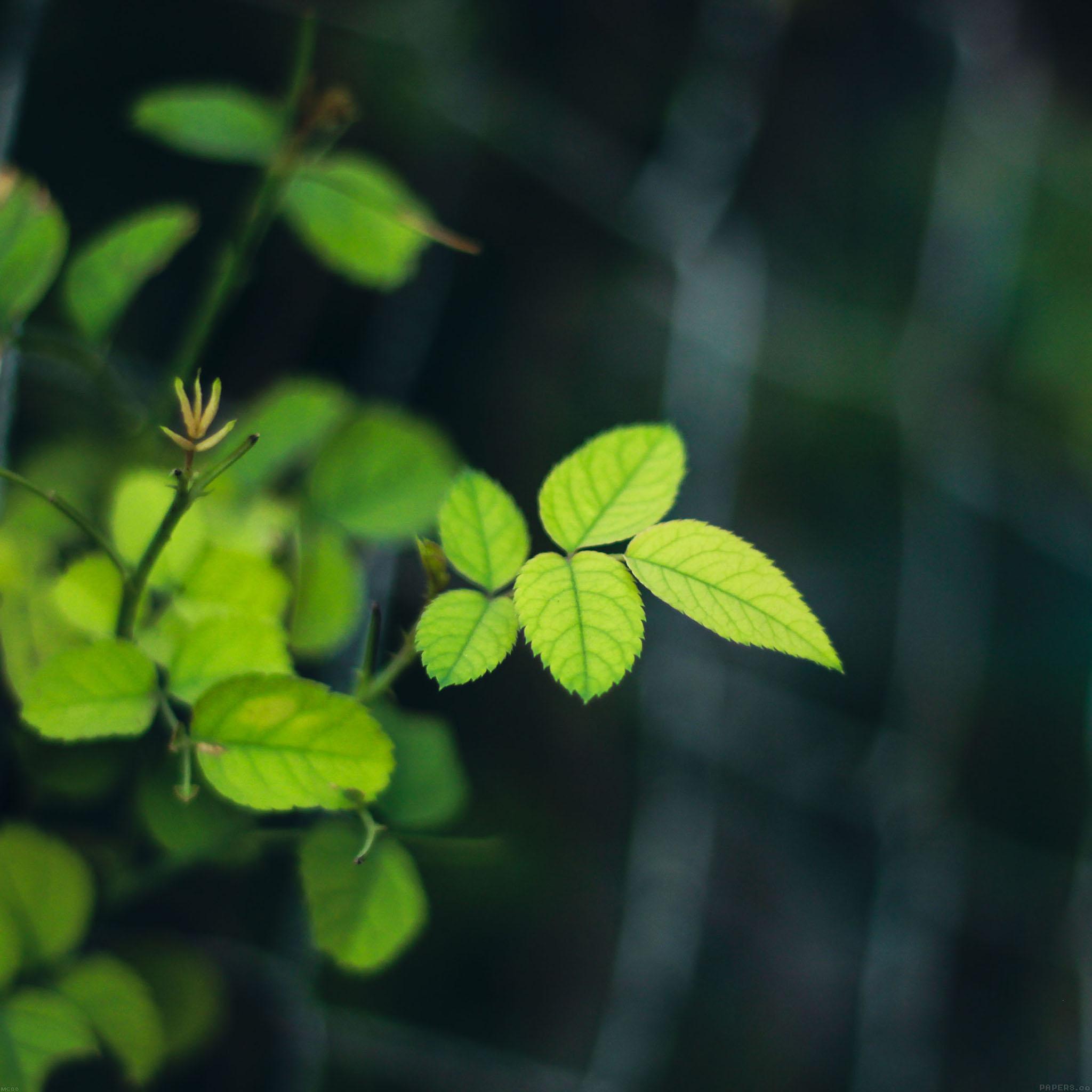 Mc00-wallpaper-greenish-flower-leaf
