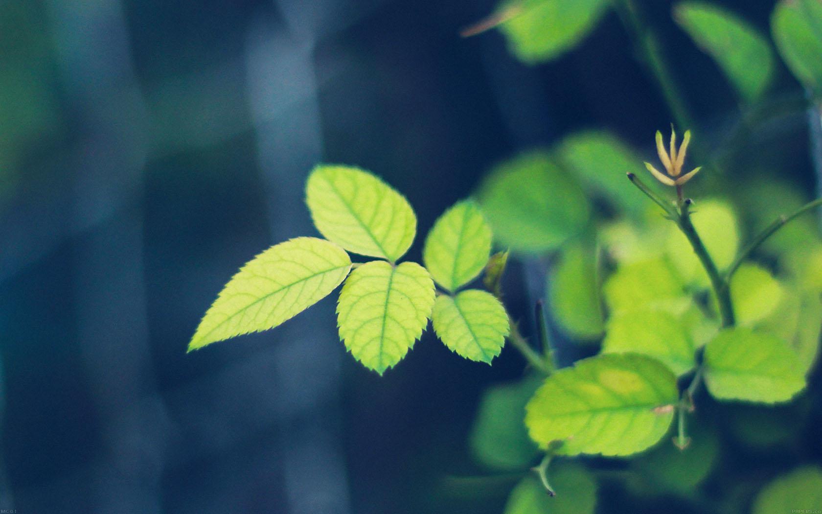 leaf essay