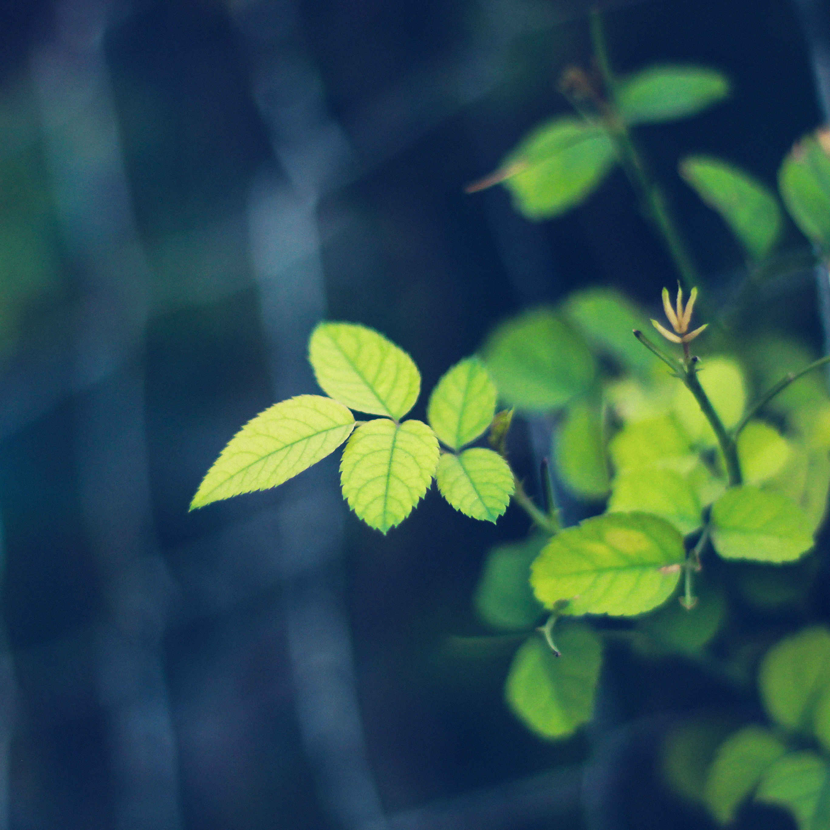 Mc01-wallpaper-greenish-flower-blue-leaf