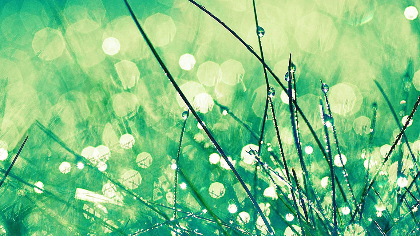 iPapers.co-Apple-iPhone-iPad-Macbook-iMac-wallpaper-mc02-wallpaper-grass-dew-greener-leaf