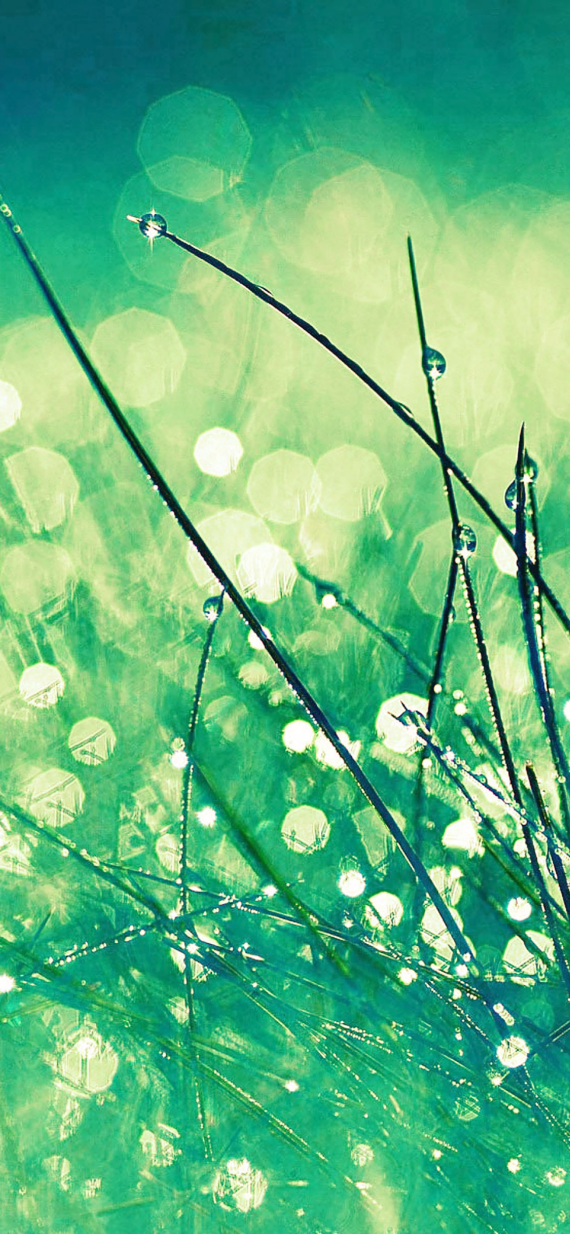 iPhoneXpapers.com-Apple-iPhone-wallpaper-mc02-wallpaper-grass-dew-greener-leaf