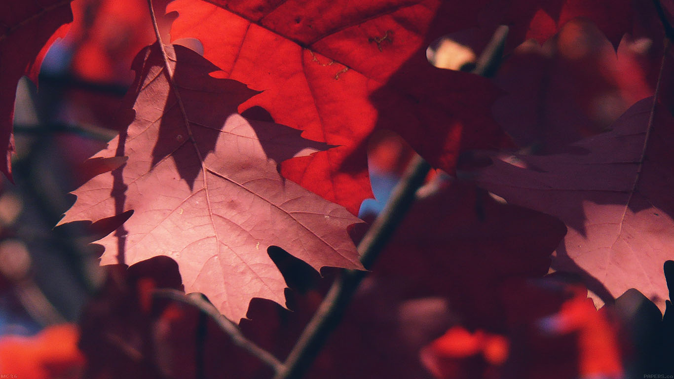 iPapers.co-Apple-iPhone-iPad-Macbook-iMac-wallpaper-mc36-wallpaper-fallis-here-tree-leaf