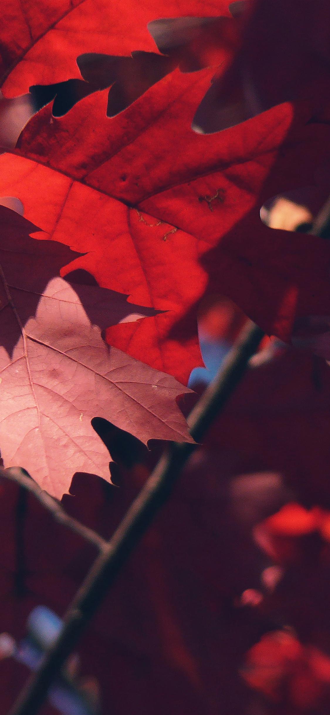 iPhoneXpapers.com-Apple-iPhone-wallpaper-mc36-wallpaper-fallis-here-tree-leaf