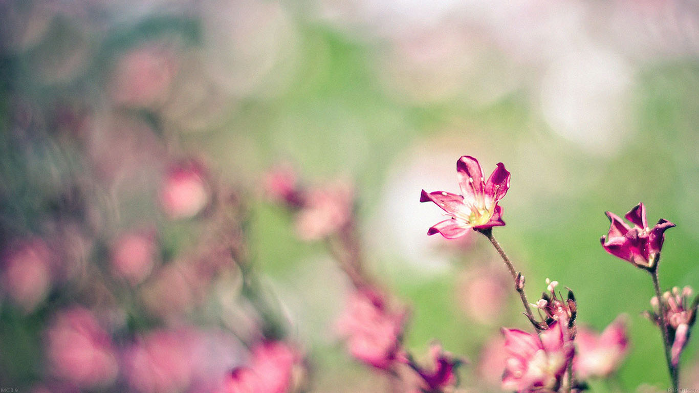 iPapers.co-Apple-iPhone-iPad-Macbook-iMac-wallpaper-mc39-wallpaper-field-pink-flowers