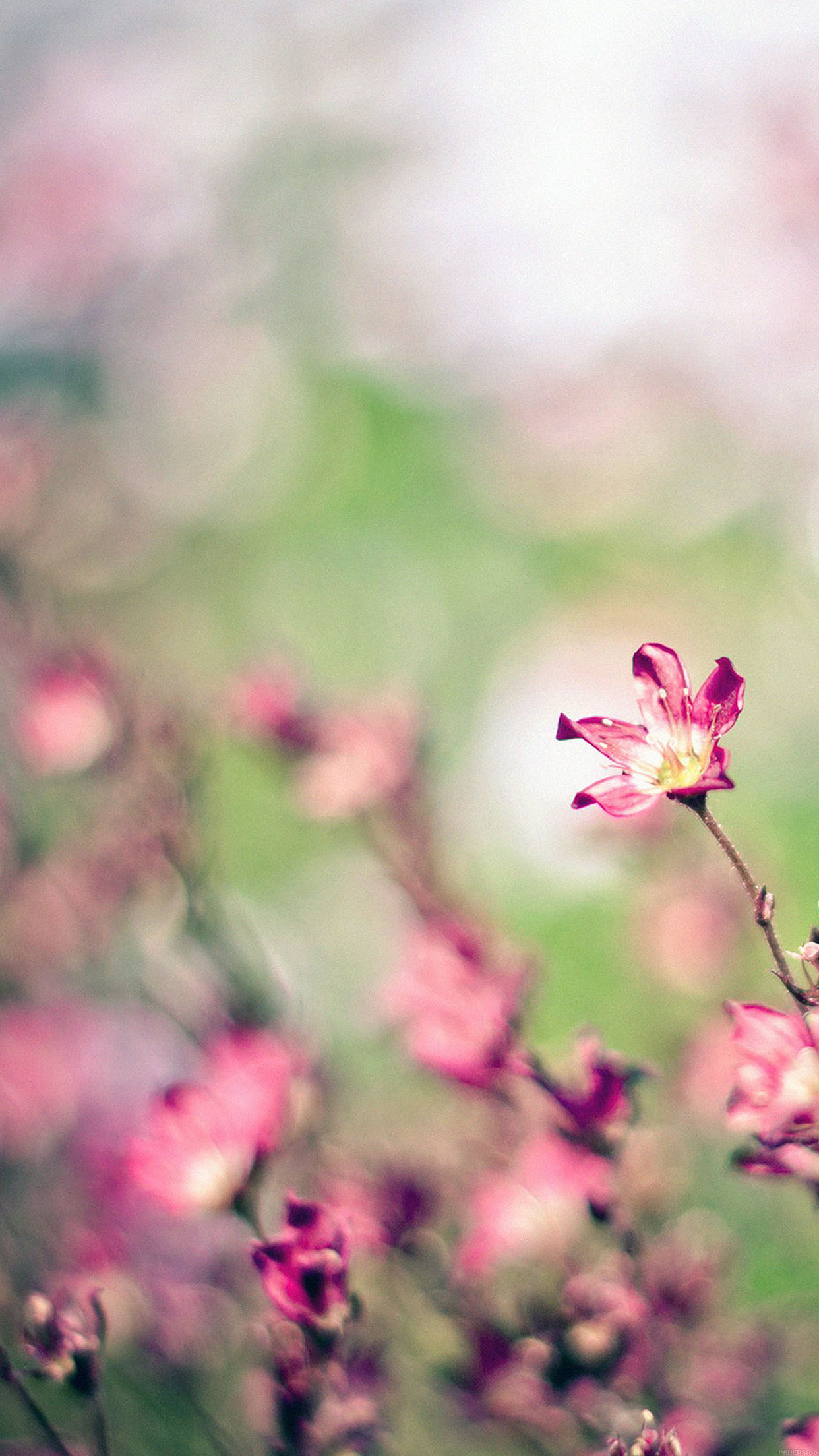 Iphone6papers mc39 wallpaper field pink flowers iphone 6 plus mightylinksfo