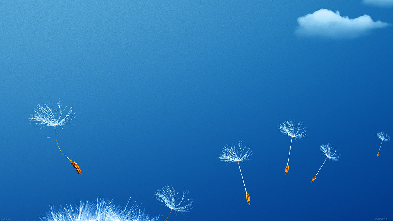 iPapers.co-Apple-iPhone-iPad-Macbook-iMac-wallpaper-mc46-wallpaper-fly-flower-dandelion