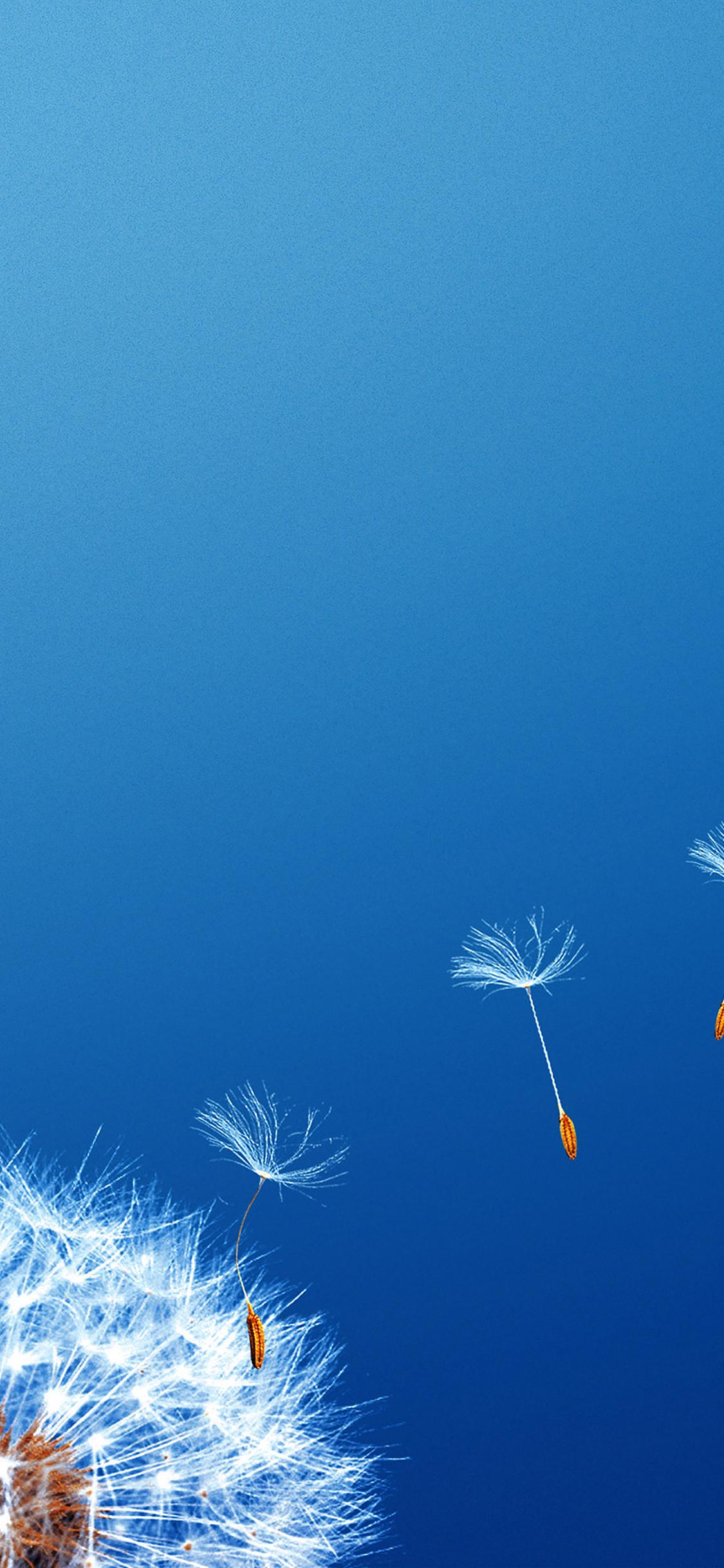 iPhoneXpapers.com-Apple-iPhone-wallpaper-mc46-wallpaper-fly-flower-dandelion