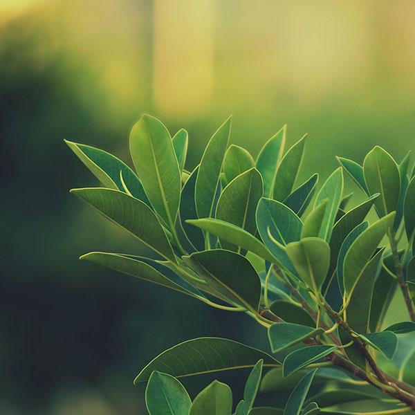 iPapers.co-Apple-iPhone-iPad-Macbook-iMac-wallpaper-mc66-wallpaper-green-species-leaf