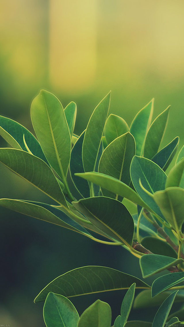 freeios8.com-iphone-4-5-6-ipad-ios8-mc66-wallpaper-green-species-leaf