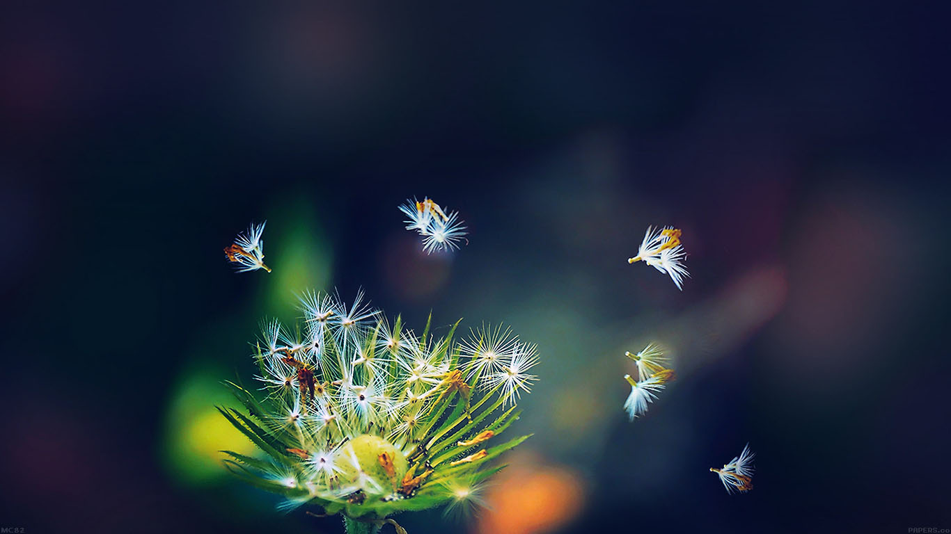 iPapers.co-Apple-iPhone-iPad-Macbook-iMac-wallpaper-mc82-wallpaper-blowing-dandelion-flower