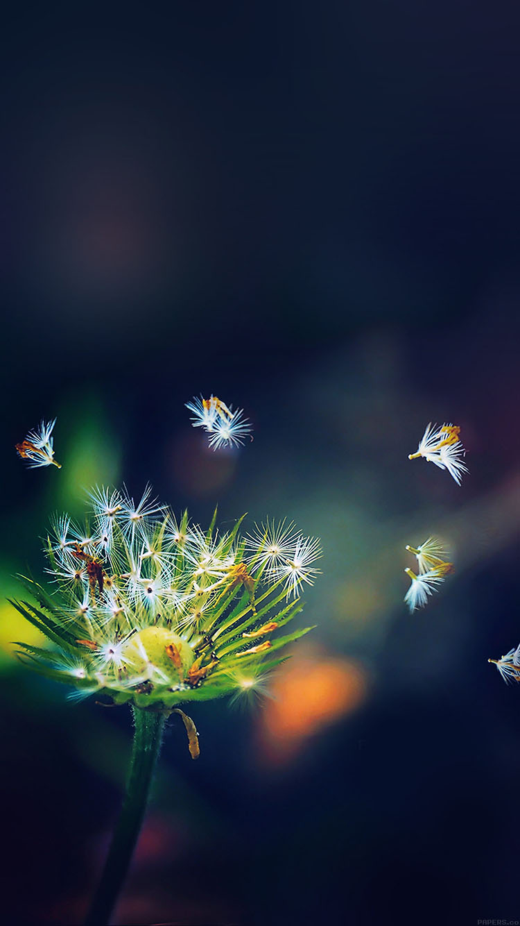 iPhonepapers.com-Apple-iPhone8-wallpaper-mc82-wallpaper-blowing-dandelion-flower