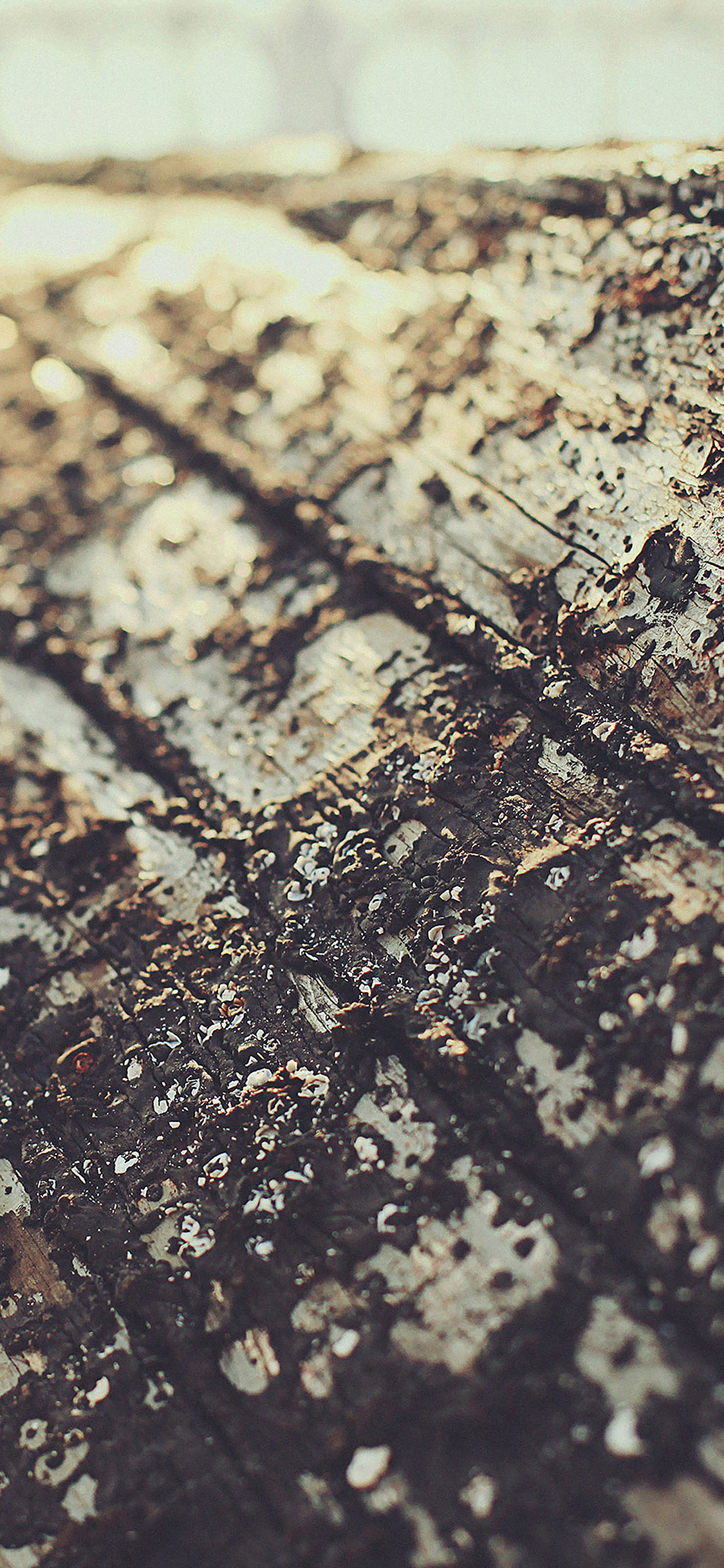 iPhoneXpapers.com-Apple-iPhone-wallpaper-mc86-wallpaper-boat-sunrise-tree-texture
