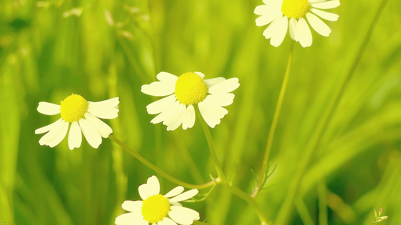 iPapers.co-Apple-iPhone-iPad-Macbook-iMac-wallpaper-mc91-wallpaper-spring-flower-white-grass-nature