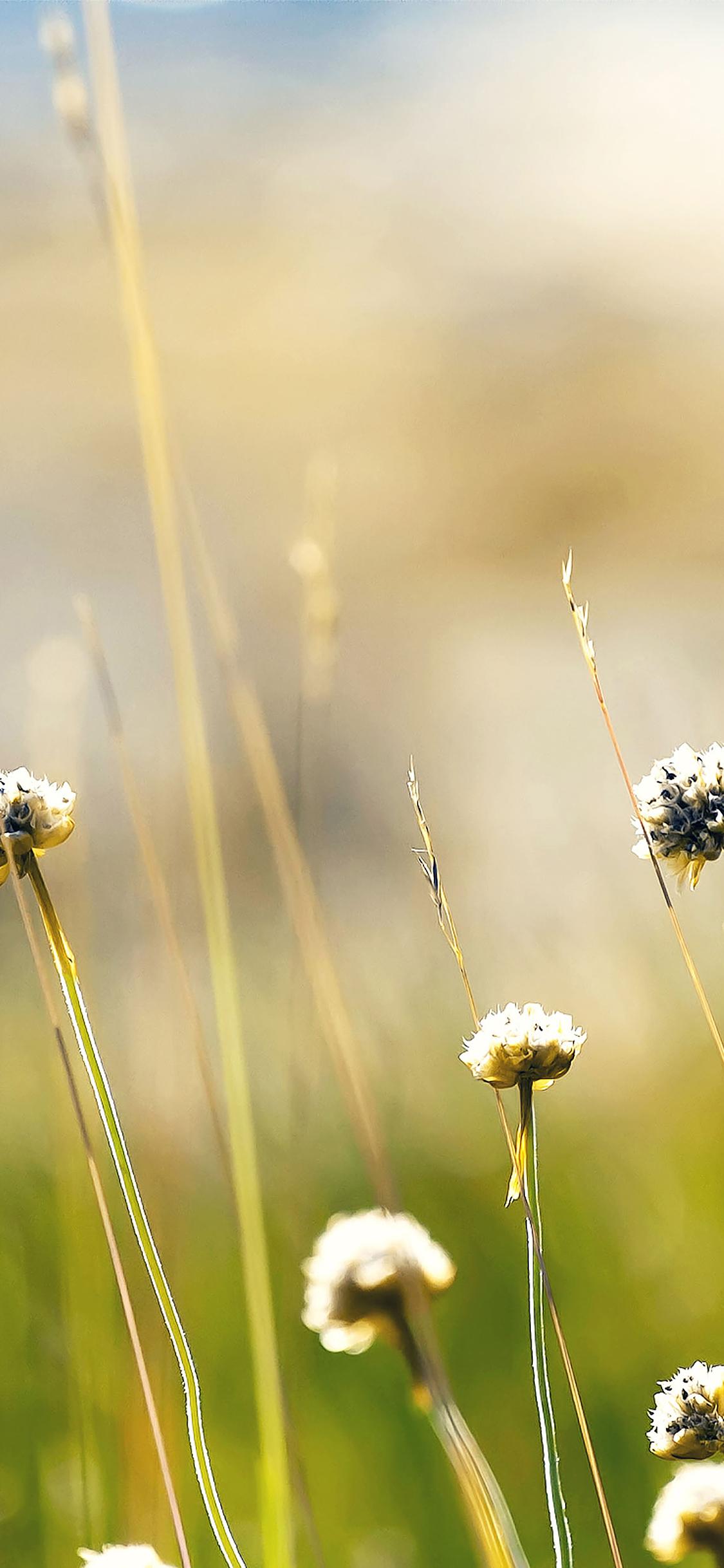 iPhoneXpapers.com-Apple-iPhone-wallpaper-mc93-wallpaper-flower-dandelion-green-nature