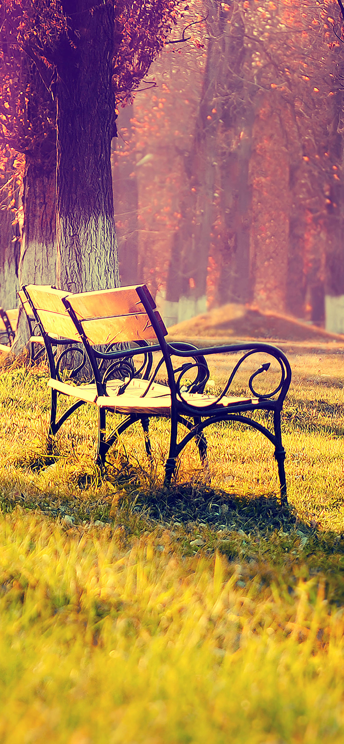 iPhoneXpapers.com-Apple-iPhone-wallpaper-md15-wallpaper-fall-park-chair-lonely-nature