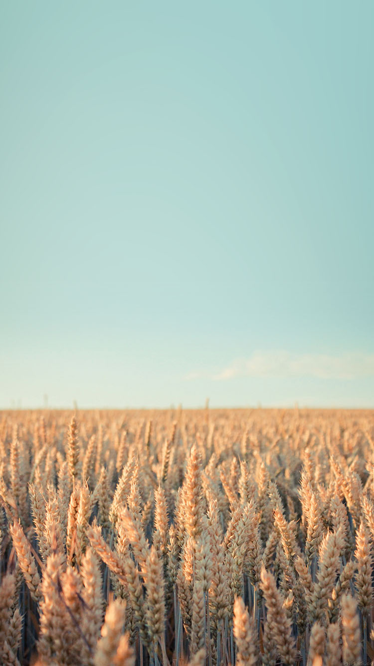 iPhone6papers.co-Apple-iPhone-6-iphone6-plus-wallpaper-md34-wallpaper-android-rye-field-sky-nature