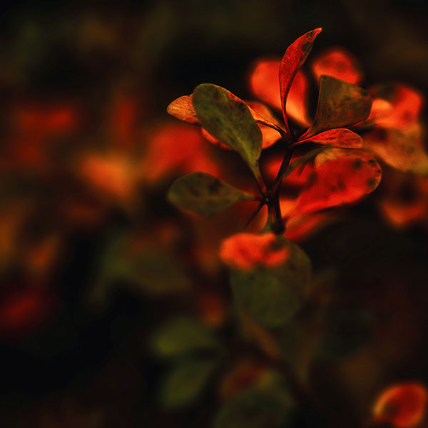 iPapers.co-Apple-iPhone-iPad-Macbook-iMac-wallpaper-md35-wallpaper-red-flowers-nature