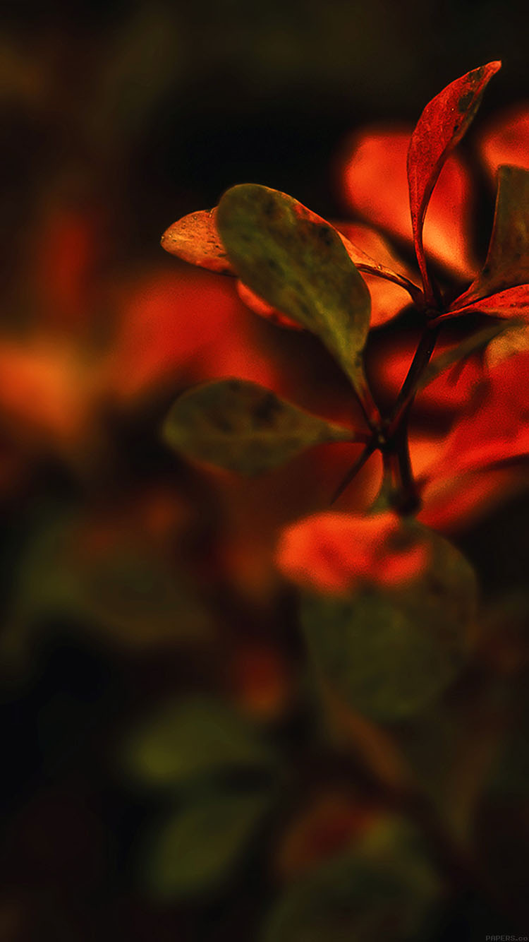 iPhone6papers.co-Apple-iPhone-6-iphone6-plus-wallpaper-md35-wallpaper-red-flowers-nature