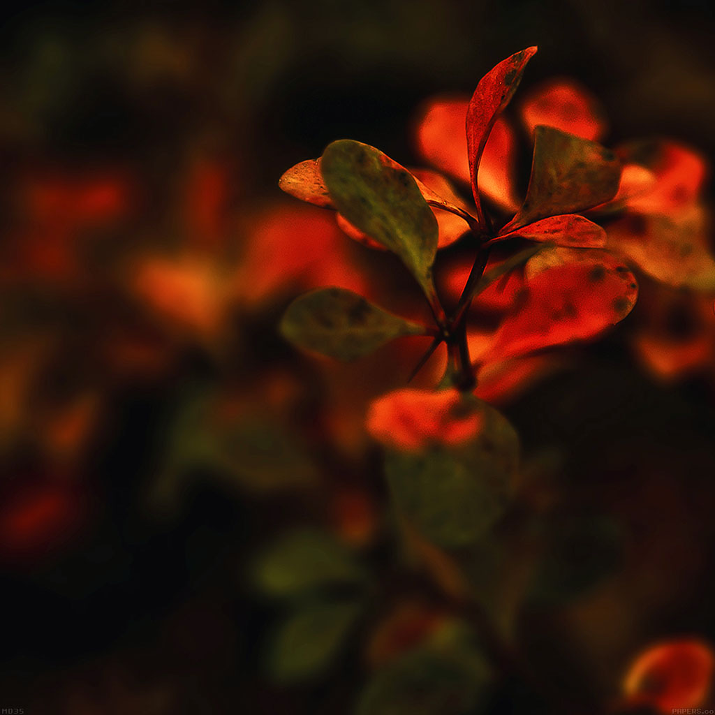android-wallpaper-md35-wallpaper-red-flowers-nature-wallpaper