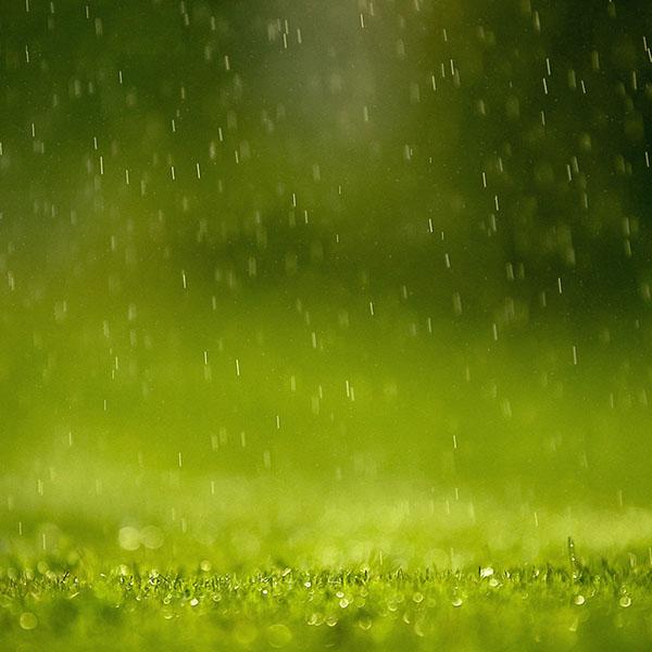 iPapers.co-Apple-iPhone-iPad-Macbook-iMac-wallpaper-md37-wallpaper-green-rain-nature
