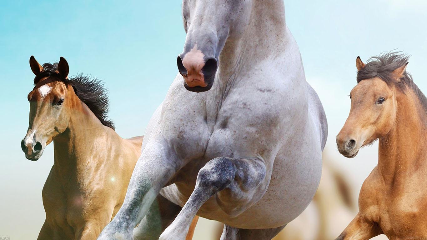 iPapers.co-Apple-iPhone-iPad-Macbook-iMac-wallpaper-md61-horses-run-animal