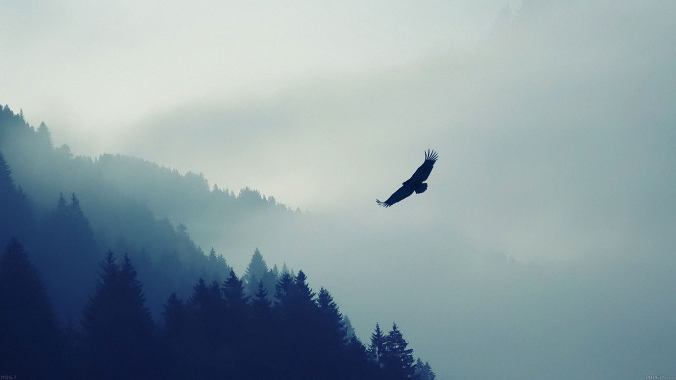 iPapers.co-Apple-iPhone-iPad-Macbook-iMac-wallpaper-md67-eagle-mountain-fly-animal