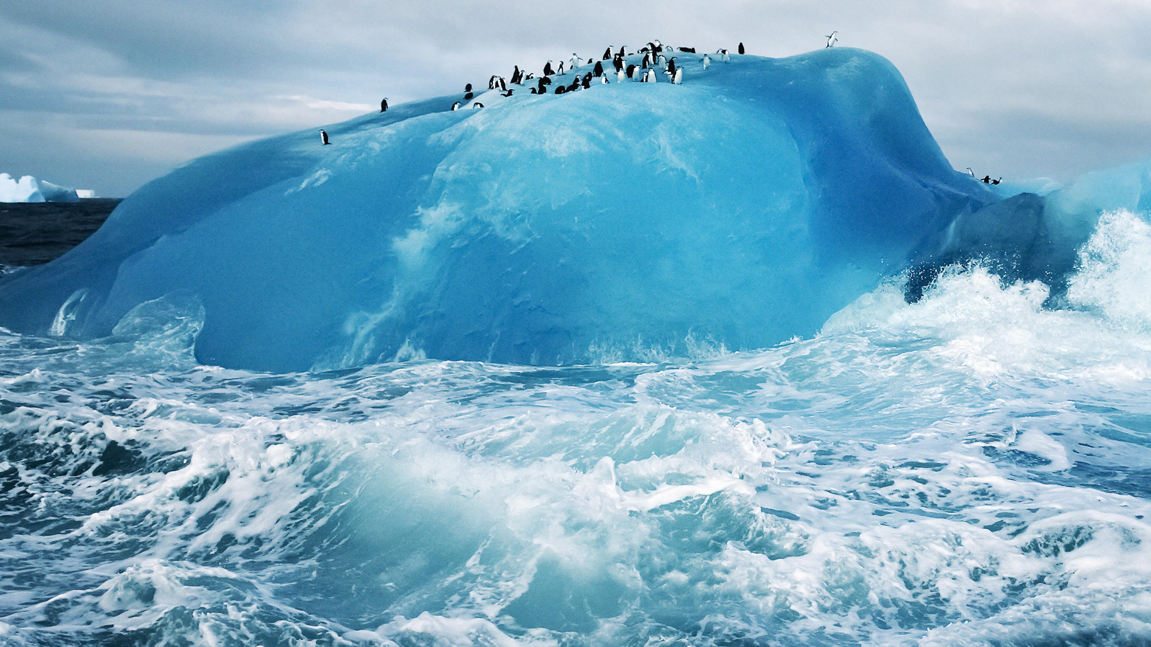 md73-penguin-iceberg-s...