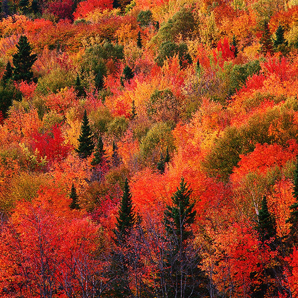 iPapers.co-Apple-iPhone-iPad-Macbook-iMac-wallpaper-md74-fall-mountain-red