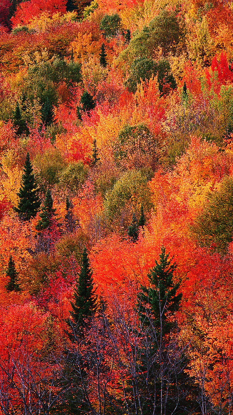iPhone6papers.co-Apple-iPhone-6-iphone6-plus-wallpaper-md74-fall-mountain-red