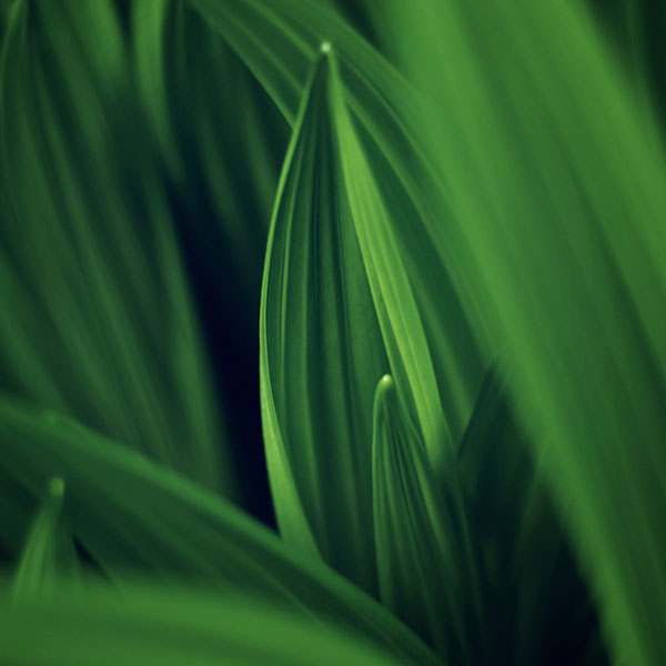 iPapers.co-Apple-iPhone-iPad-Macbook-iMac-wallpaper-md76-leaf-nature-green