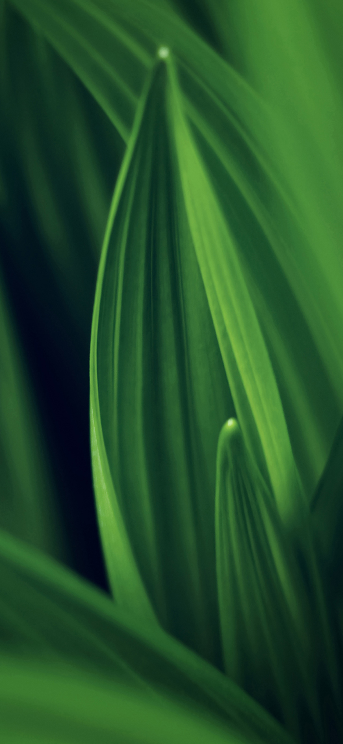 iPhoneXpapers.com-Apple-iPhone-wallpaper-md76-leaf-nature-green