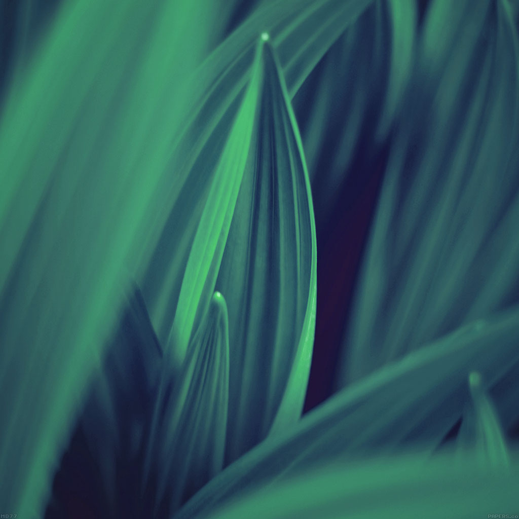 android-wallpaper-md77-leaf-nature-blue-wallpaper