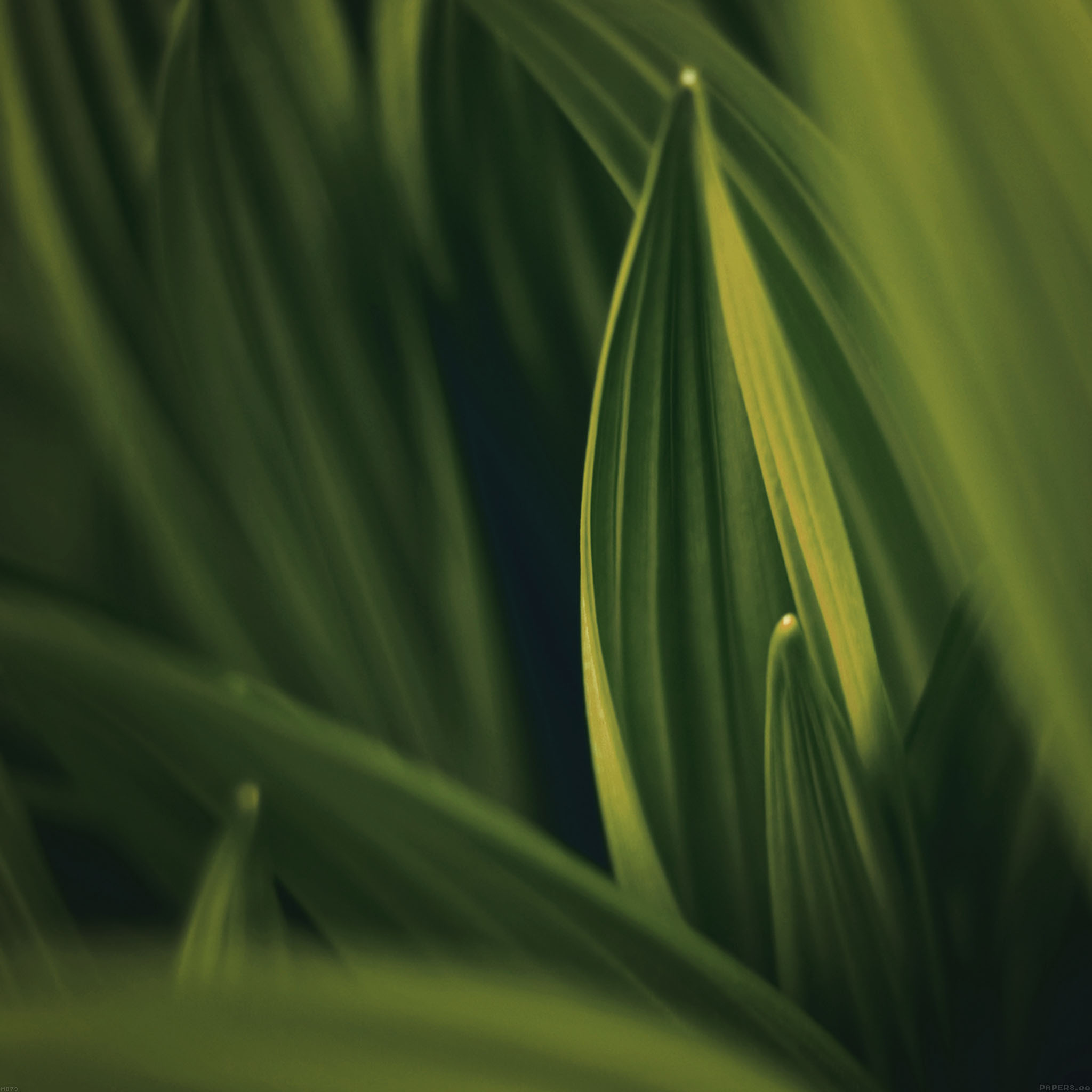 Md79-leaf-nature-yellow