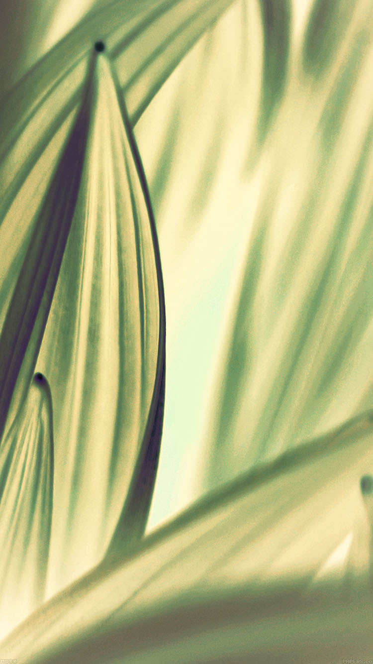 iPhone6papers.co-Apple-iPhone-6-iphone6-plus-wallpaper-md80-leaf-nature-light