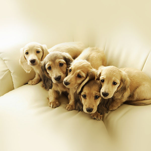 iPapers.co-Apple-iPhone-iPad-Macbook-iMac-wallpaper-me10-puppy-retriever-family-animal