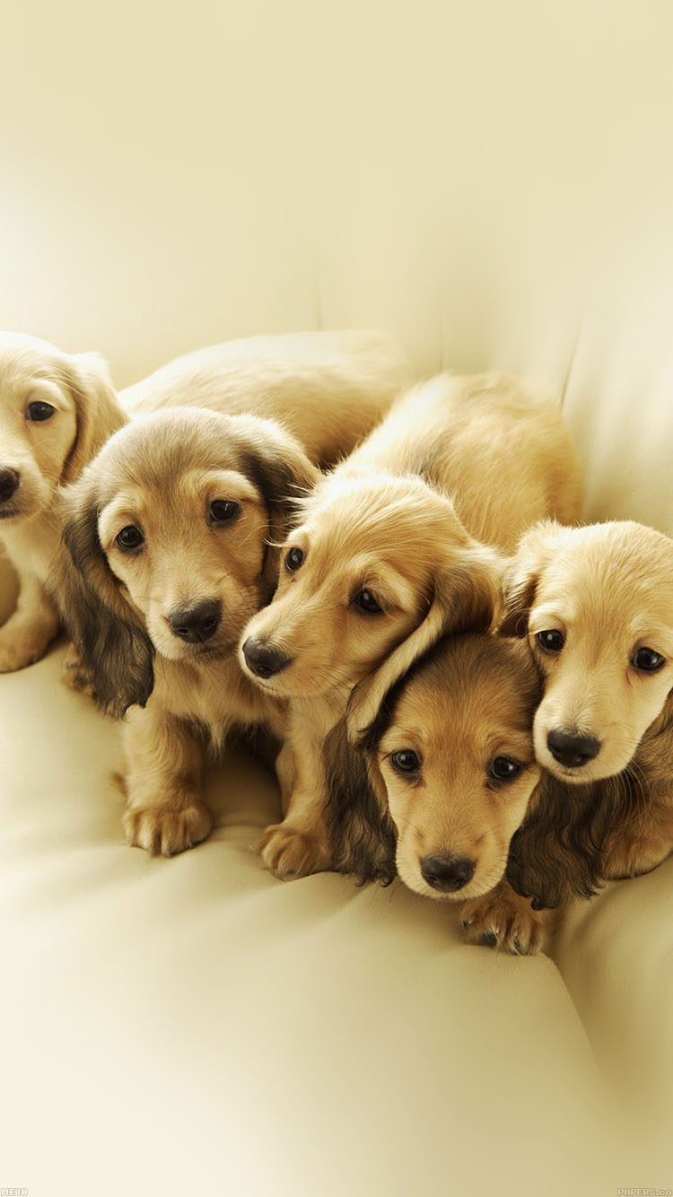 iPhone6papers.co-Apple-iPhone-6-iphone6-plus-wallpaper-me10-puppy-retriever-family-animal
