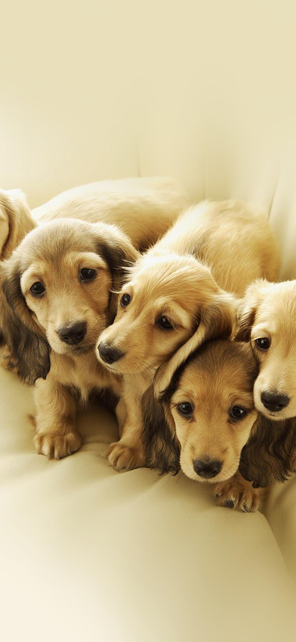 iPhoneXpapers.com-Apple-iPhone-wallpaper-me10-puppy-retriever-family-animal