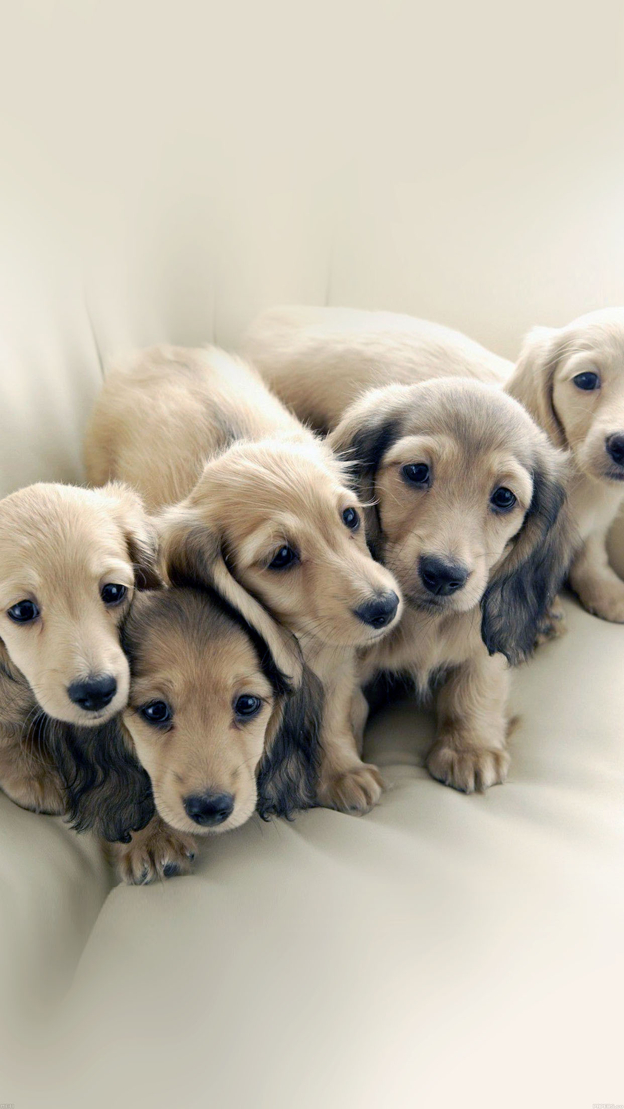 Me11 Puppy Dog Retriever Family Animal Papers Co