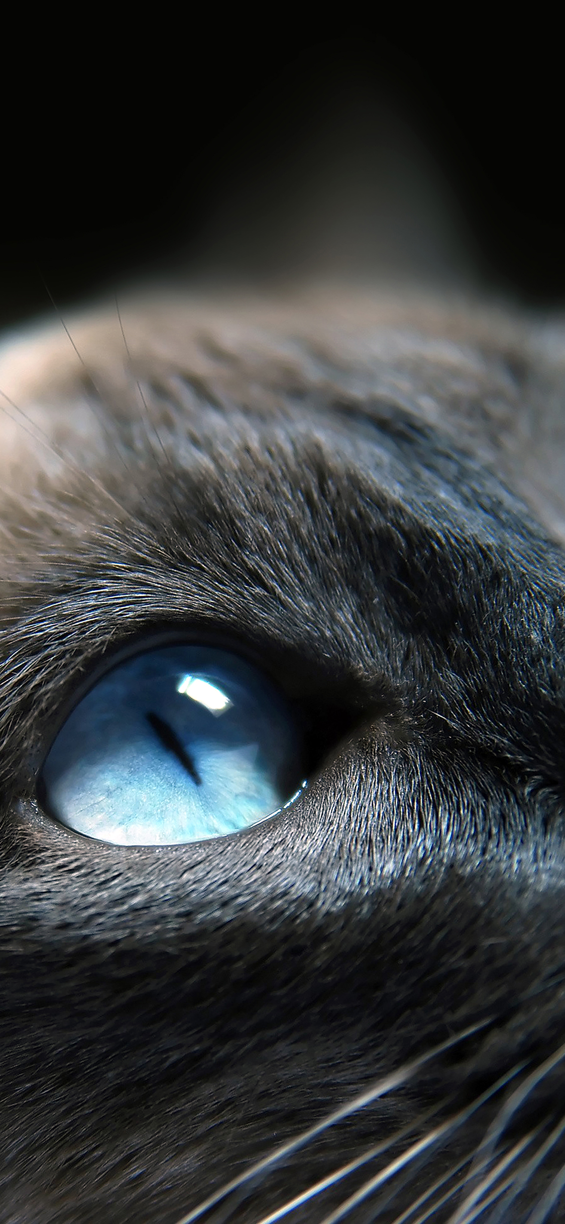 iPhoneXpapers.com-Apple-iPhone-wallpaper-me19-cats-blue-eye-cute