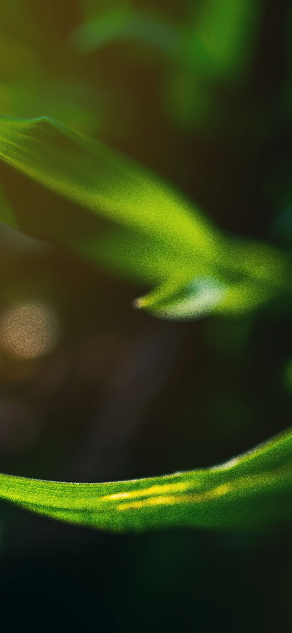 iPhoneXpapers.com-Apple-iPhone-wallpaper-me32-a-and-b-green-nature