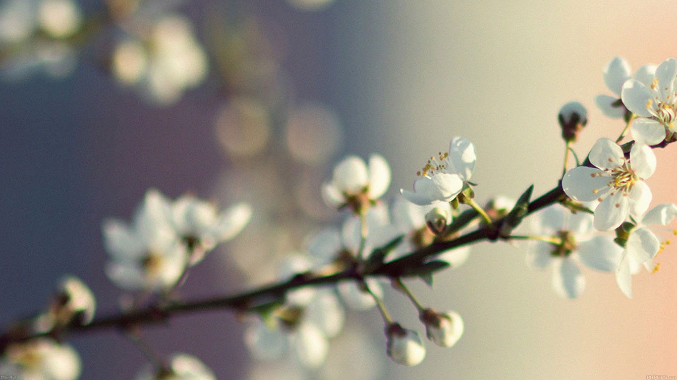 iPapers.co-Apple-iPhone-iPad-Macbook-iMac-wallpaper-me42-spring-flower-white-happy-moments-wallpaper