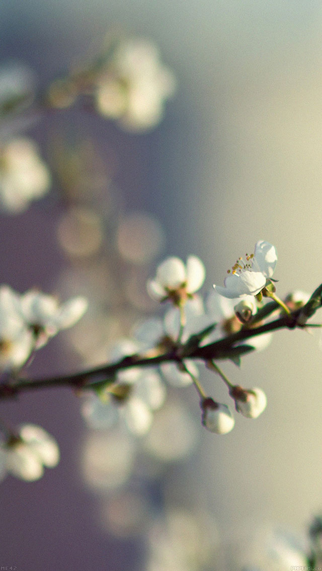 freeios8.com-iphone-4-5-6-plus-ipad-ios8-me42-spring-flower-white-happy-moments