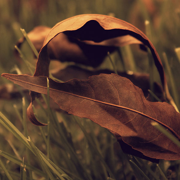 iPapers.co-Apple-iPhone-iPad-Macbook-iMac-wallpaper-me57-fall-weather-red-leaves-nature