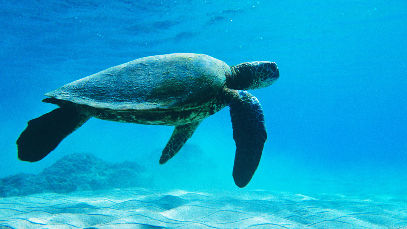 iPapers.co-Apple-iPhone-iPad-Macbook-iMac-wallpaper-me62-turtle-sea-ocean-animal