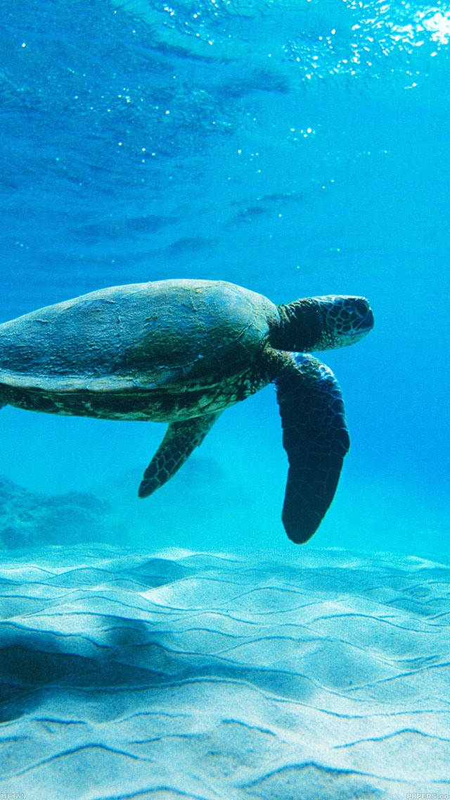 freeios8.com-iphone-4-5-6-ipad-ios8-me62-turtle-sea-ocean-animal