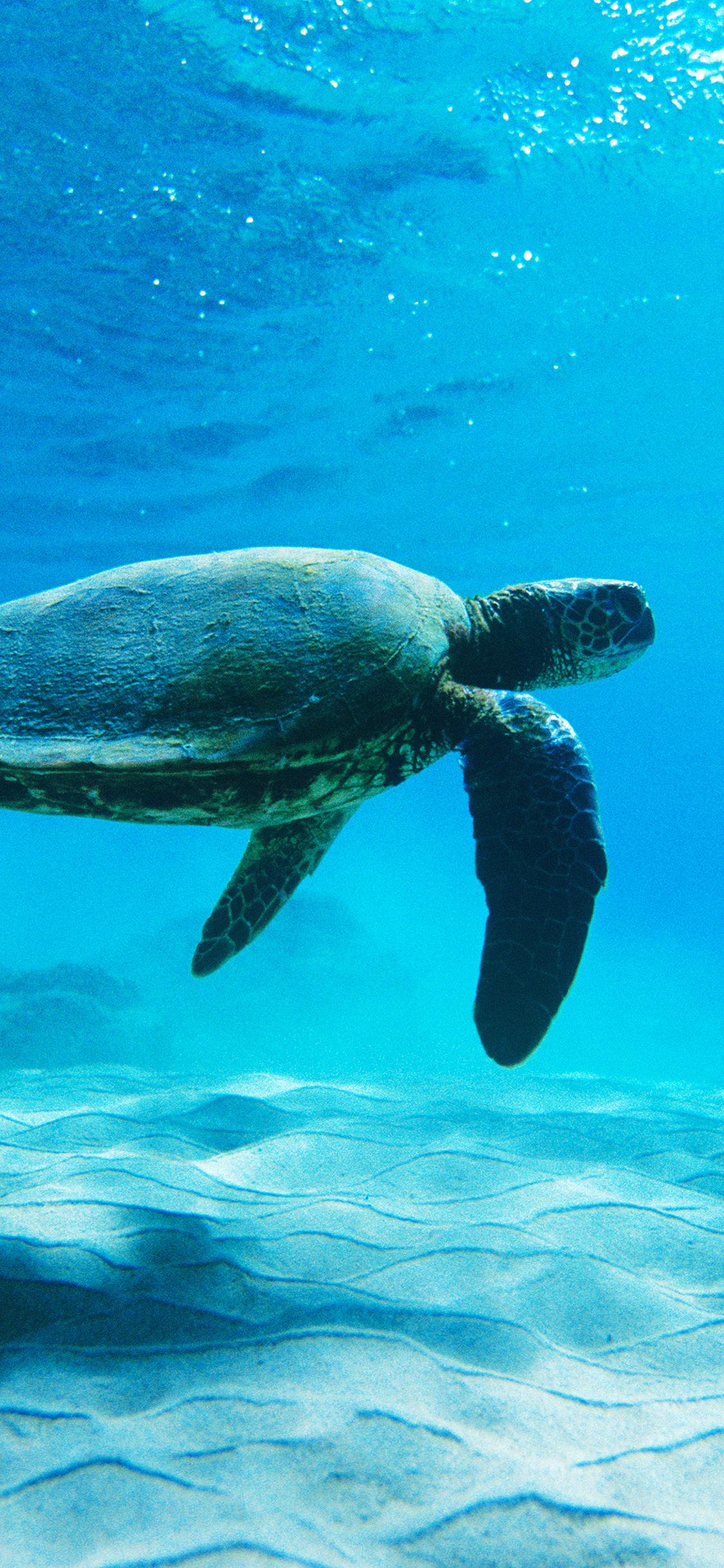 iPhoneXpapers.com-Apple-iPhone-wallpaper-me62-turtle-sea-ocean-animal