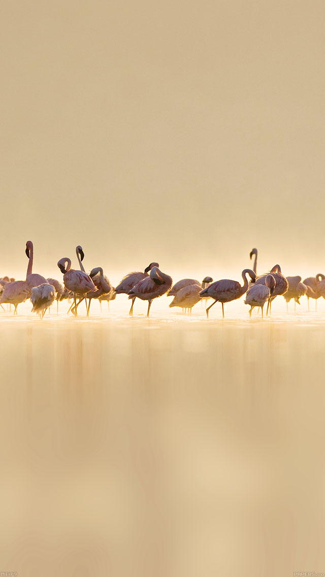 freeios8.com-iphone-4-5-6-ipad-ios8-me79-flamingos-peace-animal-nature-birds