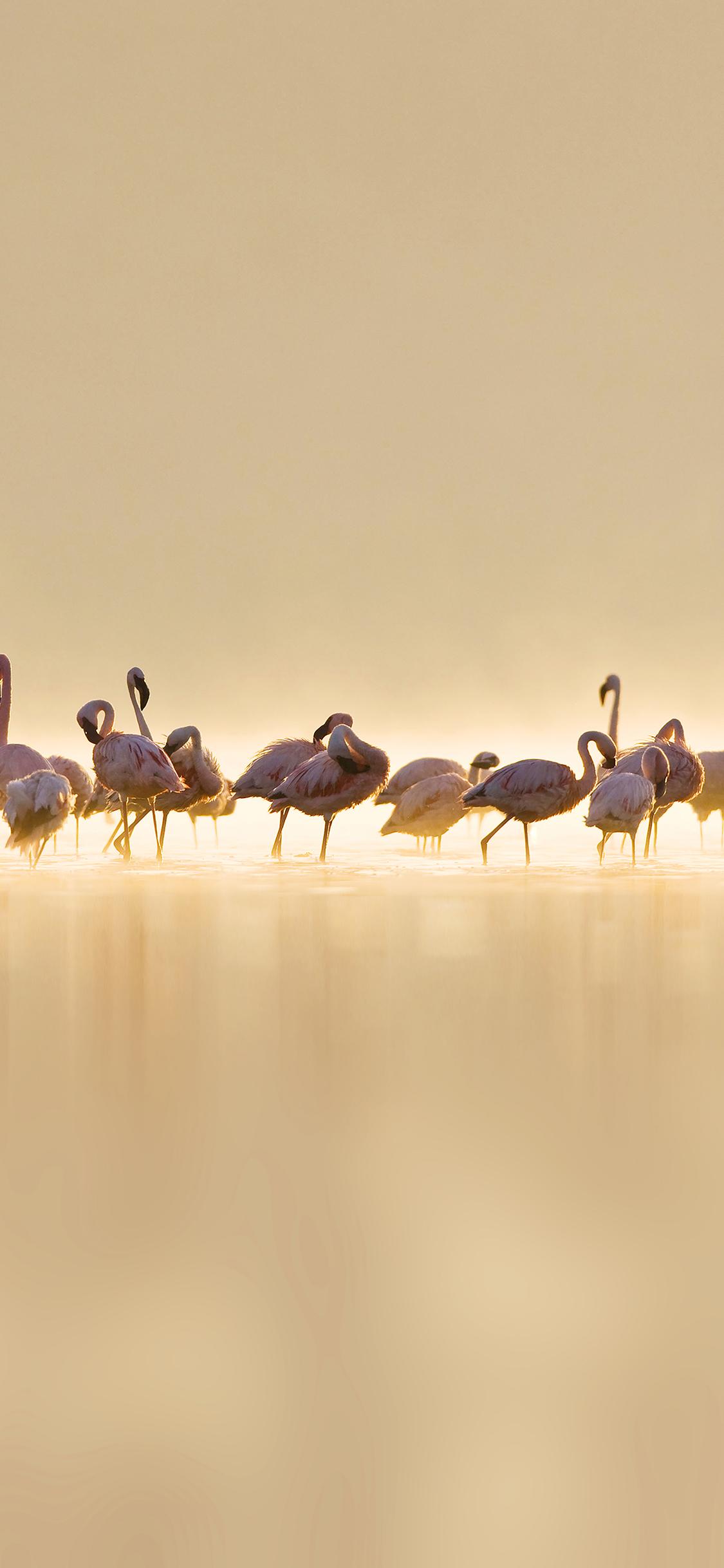iPhoneXpapers.com-Apple-iPhone-wallpaper-me79-flamingos-peace-animal-nature-birds